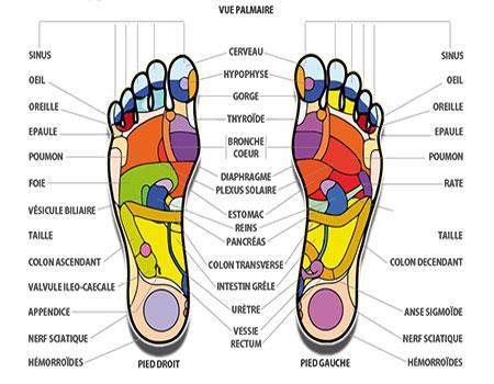 les zones réflexes du pieds